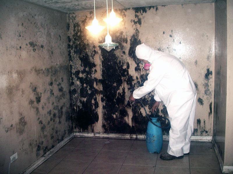 Профессиональные средства от плесени на стенах